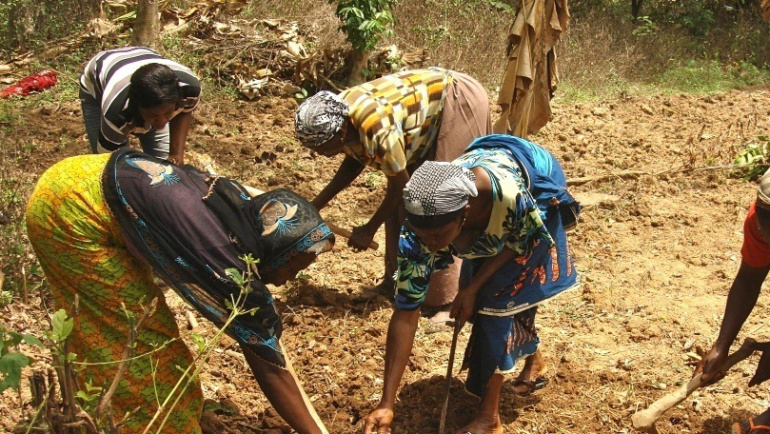 ENVIRONMENTAL PROTECTION – Coconut and Woodlot Plantation Hinda and Peter's (AJWS Volunteers) Support